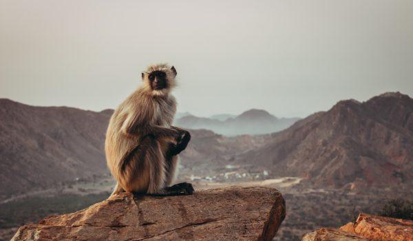 سفرنامه هندوستان قسمت سوم: راهنمای سفر به جیپور